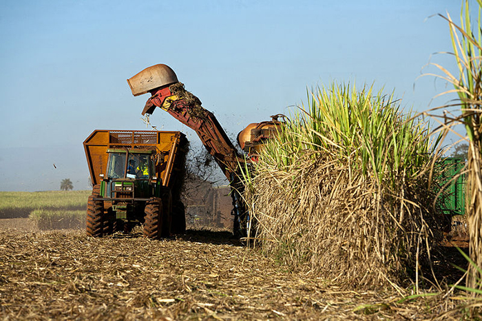 Harvesting sugar cane in Brazil. Agribusiness is another large-scale area of investment for BNDES. Agribusiness has become a powerhouse of the Brazilian economy. Photo: Jonathan Wilkins Creative Commons