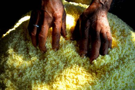 Cassava - the vital food grain